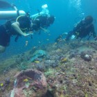 Scuba Diving in North Bay Island (Port Blair)