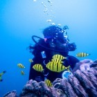 Scuba Diving in Havelock